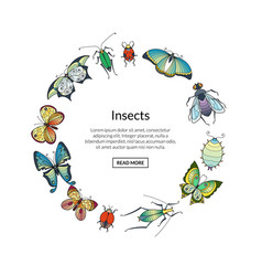 hand drawn insects in circle shape vector image