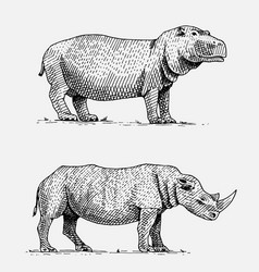 hippopotamus and black or white rhinoceros hand vector image