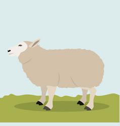 Lamb livestock animal design vector