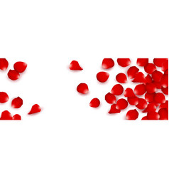 red rose petals isolated white background vector image
