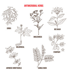 Set antimicrobial herbs vector