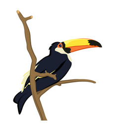 toucan bird isolated on white vector image