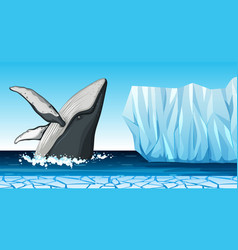 A whale in antarctica vector
