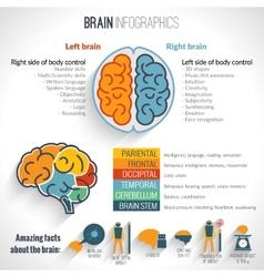 Brain inforgaphics set vector image