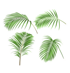 Palm leaves decoration tropical plant set two vector