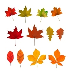 Set of the yellow autumn leaves design vector