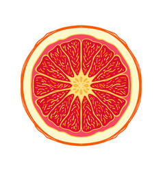Sliced colored sketch style fruit red grapefruit vector