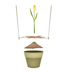 Terracotta Flower Pots with Soil and Yellow Tulip vector