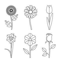 flowers line drawings vector image