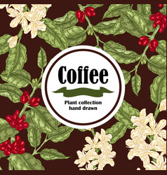 Banner with coffee plant coffee beans and vector
