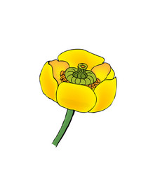 Blooming yellow water-lily vector