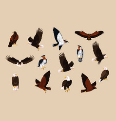 Hawks and eagles birds with different poses vector