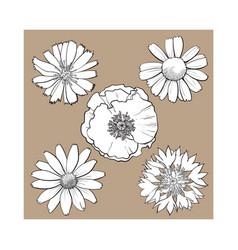 Set of wild field flowers - poppy chamomile vector