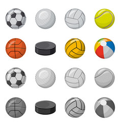 Sport and ball icon vector