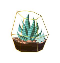Succulent striped green plant in terrarium wire vector