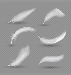 white birds feather icon set realistic vector image