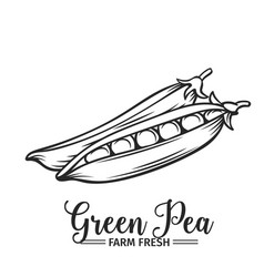 hand drawn green pea icon vector image vector image