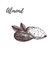 Almond hand drawn sketch vector image