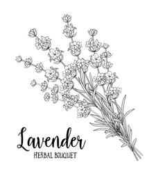 Bouquet lavender flowers vector