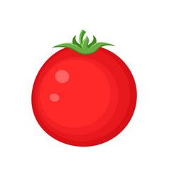 colorful red tomato vegetable vector image