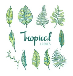 Set of tropical leaves isolated on white vector image vector image