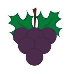 grape bunch icon vector image