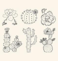 home cactus plants and flowers set of cozy cute vector image