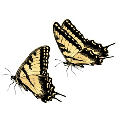 Tiger Swallowtail Butterfly vector
