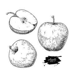 Apple drawing hand drawn fruit and sliced vector