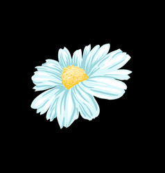 chamomile or daisy tea herb isolated vector image