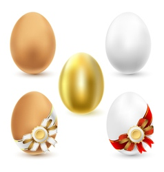 chicken eggs vector image