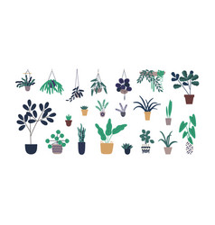 set colorful cartoon pottery plant isolated on vector image