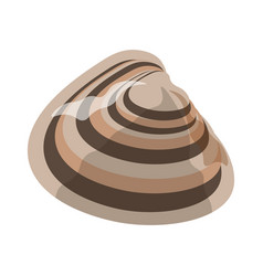 shell or seashell and sea or ocean mollusk vector image