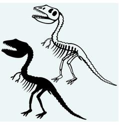 Tyrannosaurus skeleton vector
