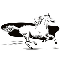 white horse galloping vector image