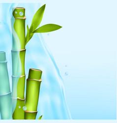 Bamboo in a water splash vector