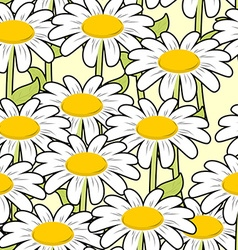 Chamomile seamless pattern Beautiful flowers vector image vector image