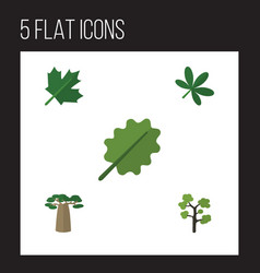 Flat icon natural set of baobab maple alder and vector