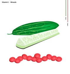 Fresh Marrow with Vitamin K and Minerals vector