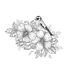 Hand drawn goldfinch sitting on hibiscus branch vector