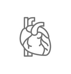 Heart artery vein human organ line icon vector