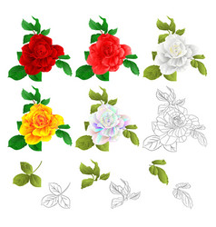 rose red pink white yellow colored and outline vector image