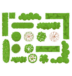 top view trees and bushes forest tree green park vector image