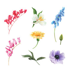 Set watercolor flower bud elements isolated vector