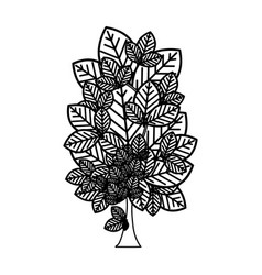Sketch silhouette leafy tree plant with several vector