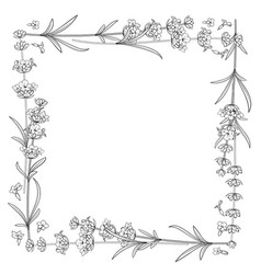 The lavender frame line vector
