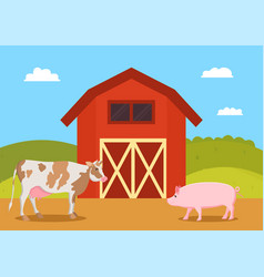 Cow and pig swine on farm vector