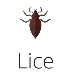 Lice skin parasite insect bug vector
