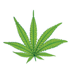 marijuana colorful leaf vector image
