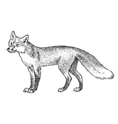 Red fox wild animal symbol of the north and the vector